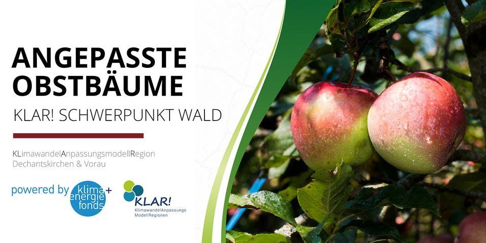 04_obstbaeume_web